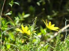 wildflower twins